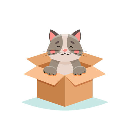 Adopt a pet - cute cat in a box, isolated on white background