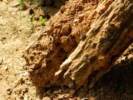 weathered: Weathered Wood Stock Photo