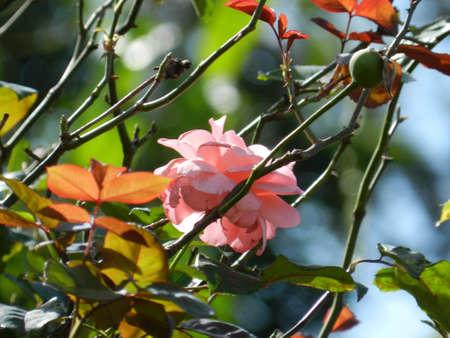 are hidden: Hidden Pink Flower