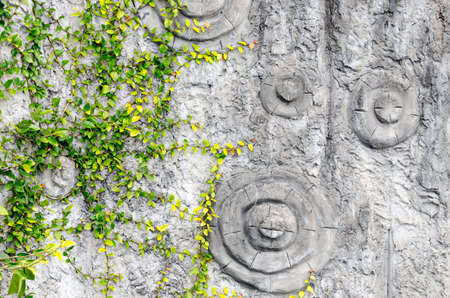 hollows: Summer forest background. Green leaves on gray tree bark. Nature background