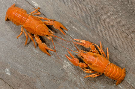 Two red crayfishes wrestling on old dark wooden table