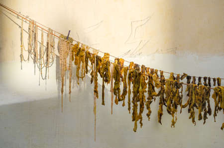 innards: Sheep innards drying on a clothesline in the sun in Morocco