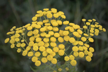 yellow wildflowers: yellow wildflowers in the field summer day Stock Photo