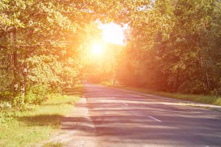 forest car road background with sun effect