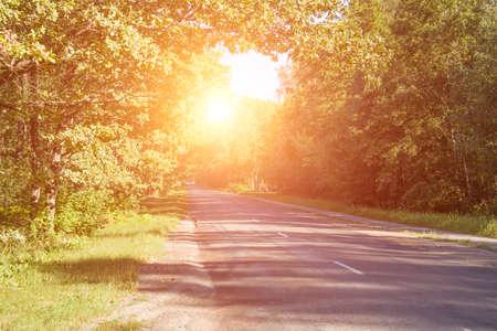sfondo strada forestale con effetto sole Archivio Fotografico