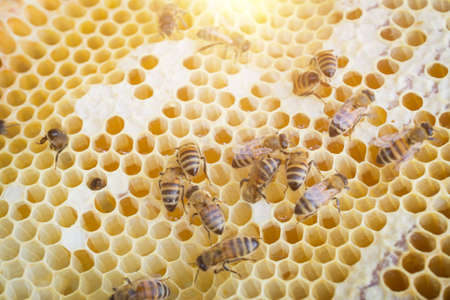Extreme close up of a Honey bee hive frame