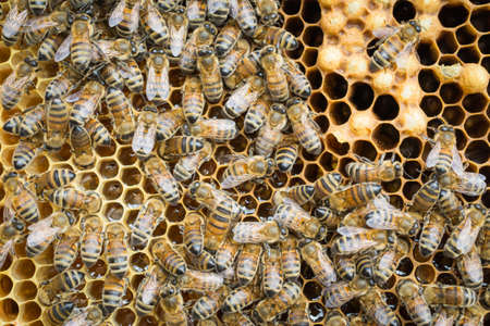 Bee hives of a beekeeper in the care of bees with honeycombs and honey bees