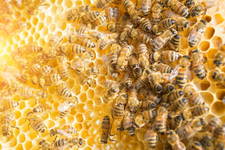 hive frame close-up, honey cell, bee working, teamwork concept