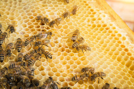 bees on the honeycomb close-up honey cell