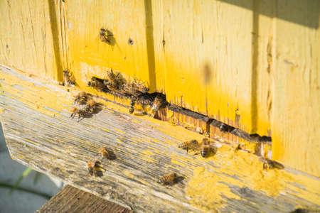 Beekeeping, beekeeper at work, bees in flight, teamwork concept Banque d'images - 129917961
