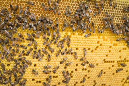 Yellow background, teamwork concept, Bees working on honey cell close-up