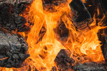Fire close up background, wood fire flame