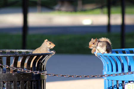 Squirrel and Chipmunk at Lincoln Memorial Park