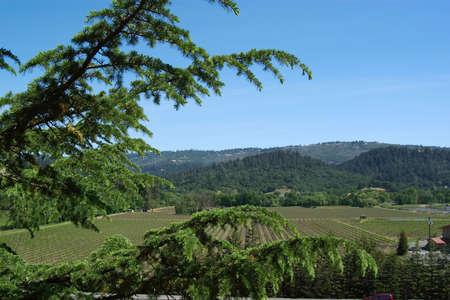 nappa: Nappa valley vinyard in the sunlight Stock Photo