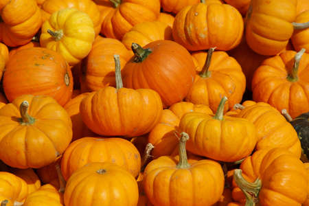 Bunch of small pumpkins right before Halloween Stock Photo - 20153348
