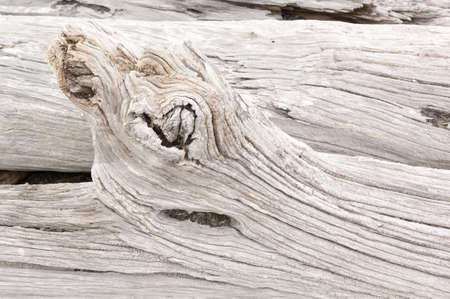 Detail of weathered driftwood found on the Chilean coast in Patagonia Stock Photo