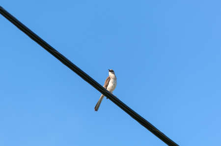 Bird on a wire against blue sky. Suitable for portrait or landscape backgrounds with sufficient area to permit cropping to show coming or going.