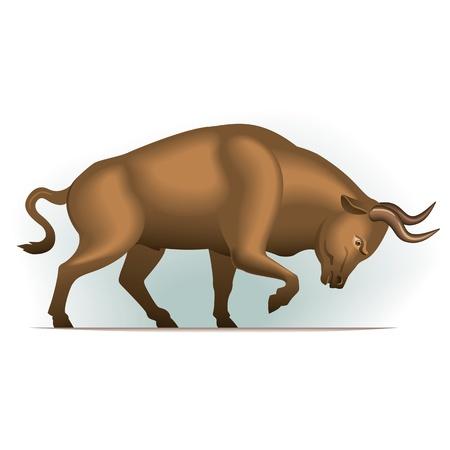 toros bravos: Toro ilustración vectorial en color, el tema financiero, aislado en el fondo.