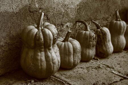 sawdust: Pumpkins - sepia Stock Photo