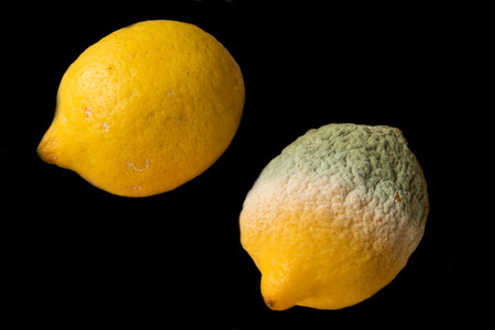 Food - Lemons - one good one rotten - black background