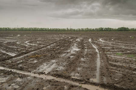 arable land: Arable land after the rain