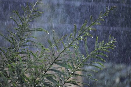 Beautiful rainy season