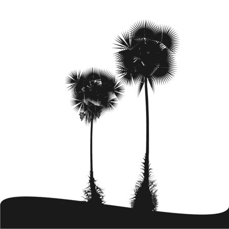 back lit: Palm Isolated On White