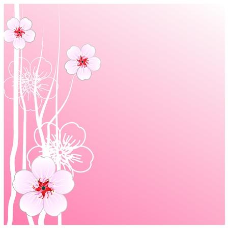Flowers sakura thailand Stock Vector - 16947316