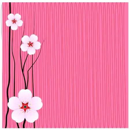 Flowers sakura thailand background Vector