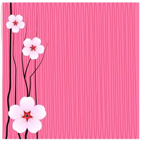 Flowers sakura thailand background