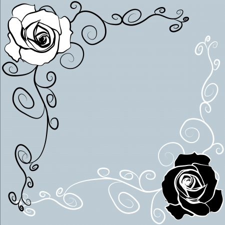 white roses Stock Vector - 17240430