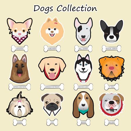 beagle puppy: Colecci�n de perros