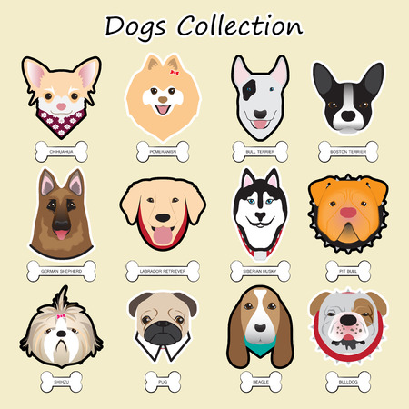 beagle terrier: dogs collection