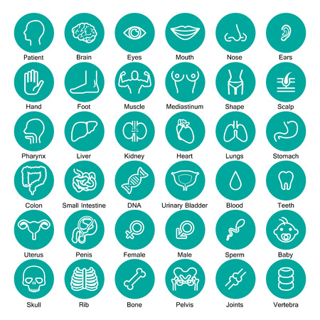 ovaire: icône, ensemble d'organes Illustration