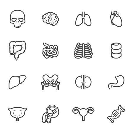 icon organ medical set Vector