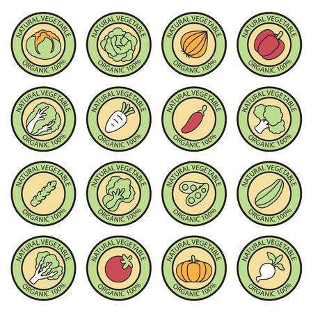 vegetable gardening: Vegetable garden banner vector