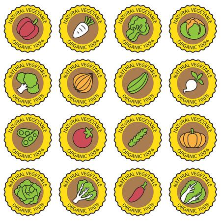 courgette: Vegetable garden banner vector
