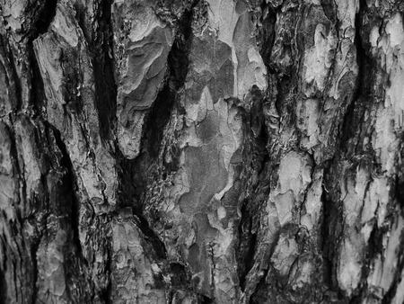 jawbone: jawbone bark Stock Photo