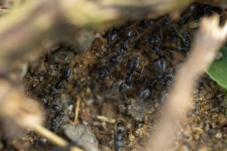 Ants working in the Grass in Civitavecchia Italy