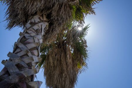 Palm Tree on the Beach of Civitavecchia in Italy