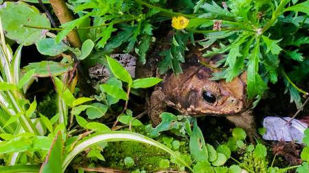 녹색 관목에 앉아 코스타리카 개구리