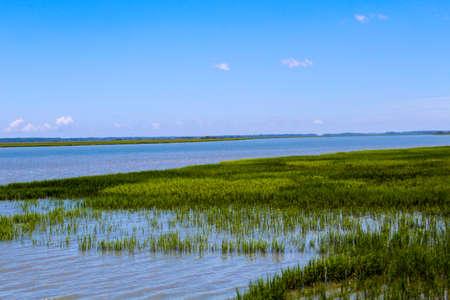Ocean marsh seen by the shoreside
