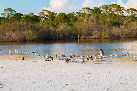 vegatation: Beach Image Stock Photo