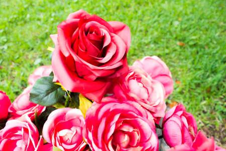 vegatation: Roses background.