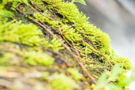 Moss green soaked in sunlight at morning day