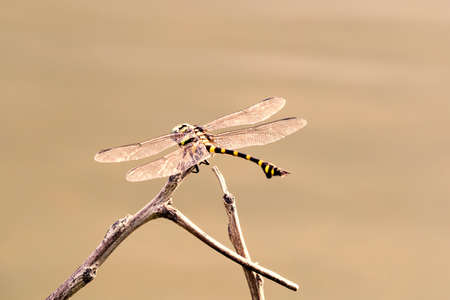 Dragonfly on the branch settler scratching the surface in hard shine in morning