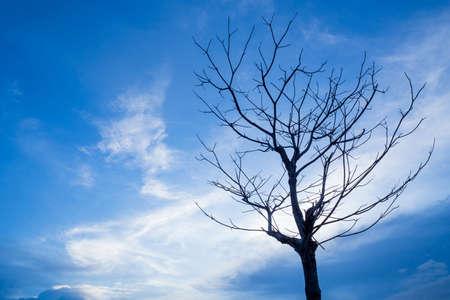 evening sky: Dead tree on evening sky in blue