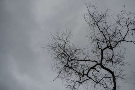 high section: Dead trees on overcast sky in rain come Stock Photo