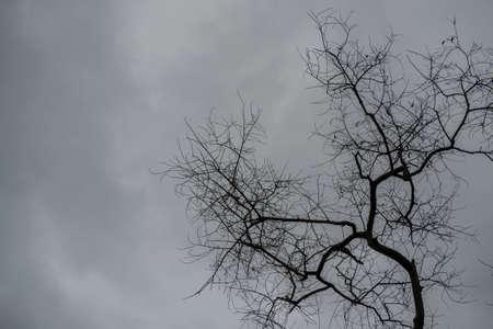 come in: Dead trees on overcast sky in rain come Stock Photo