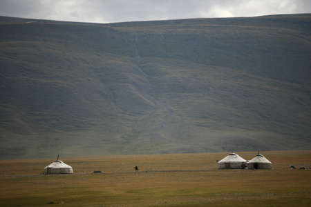 ger: Yurts on a green field in Mongolia